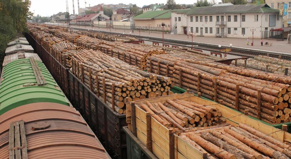 Россия и Китай, лес